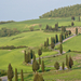 Cypress-lined road in Val d' Orcia